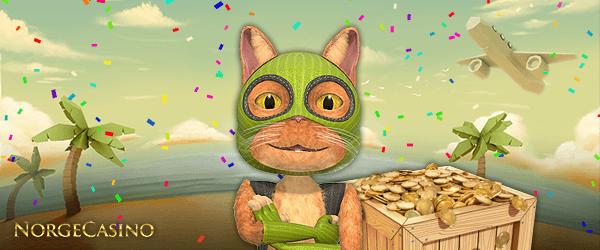 katt med maske