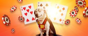 spillekort, glad hund, sjetonger