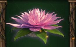 scatter lotus netent